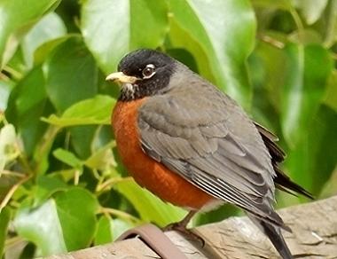 Robin on Wander Nature
