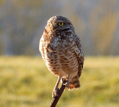 Owl on Wander Nature