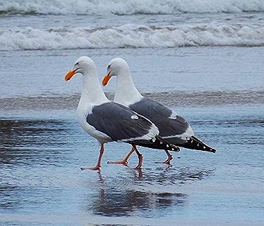 Seagulls on Wander Nature