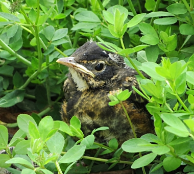 Fledgling on Wander Nature