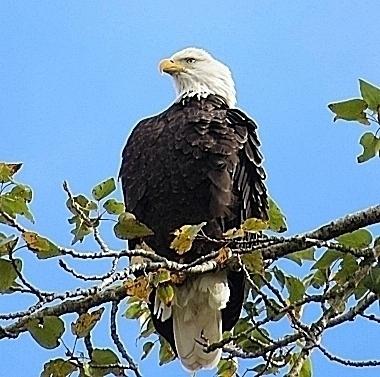 Eagle on Wander Nature