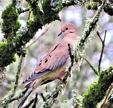 Dove on Wander Nature