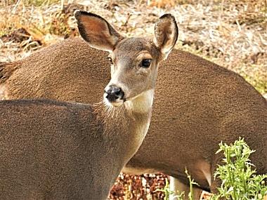 Deer on Wander Nature
