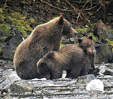 Bears on Wander Nature
