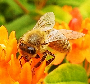 Bee and Flower on Wander Nature