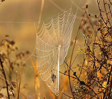 Spiderweb on Wander Nature