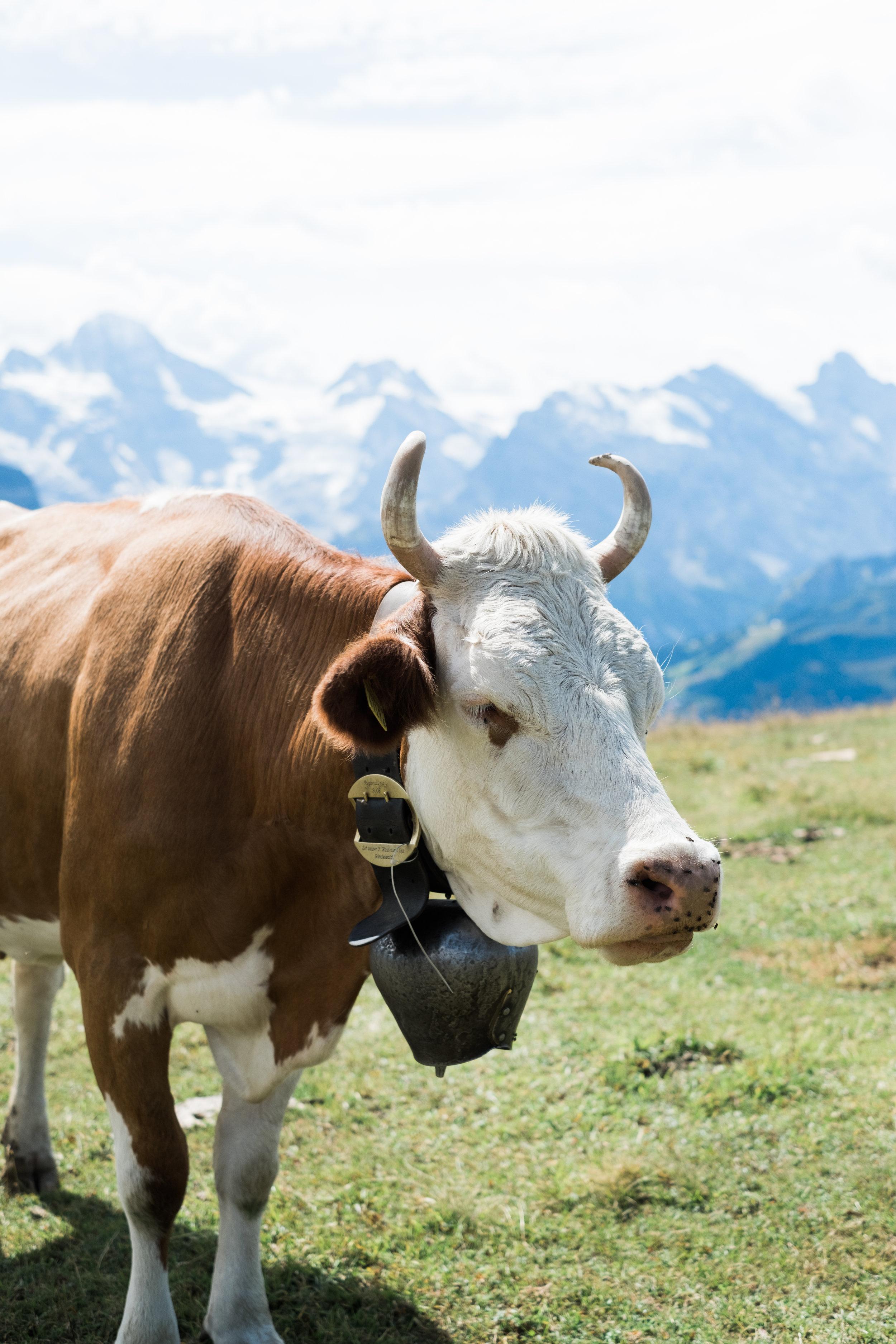 Switzerland-19.jpg
