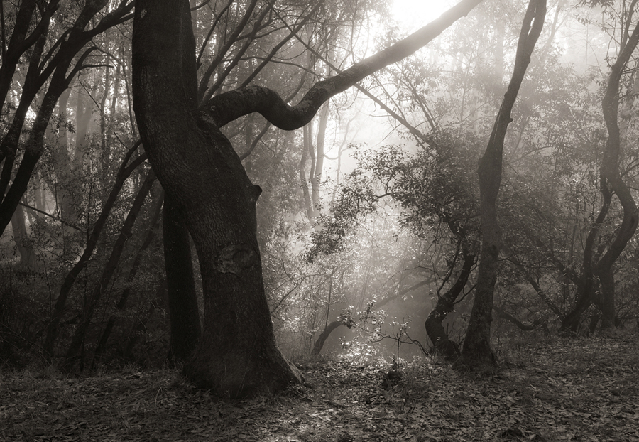 Forest-misty-light-bw-V_sm.jpg