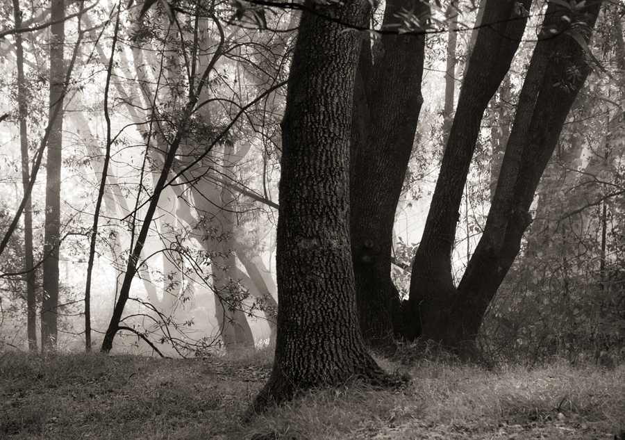 Forest-misty-light-bw-IV_sm.jpg