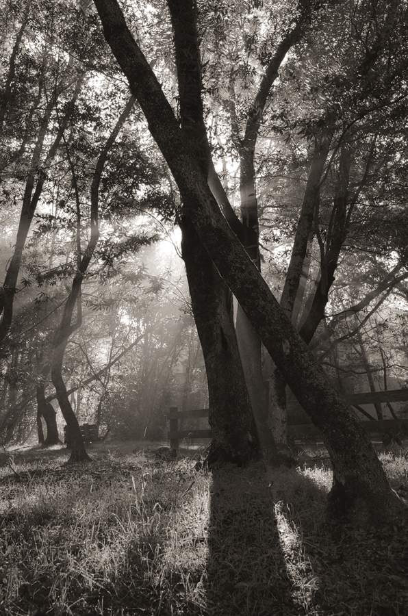 Forest-misty-light-bw-II_sm.jpg