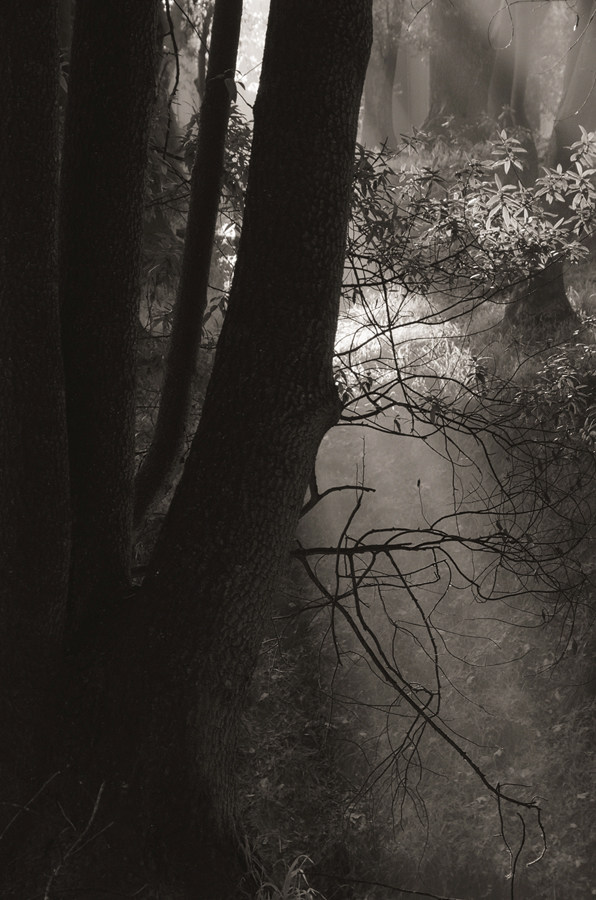 Forest-misty-light-bw_sm.jpg