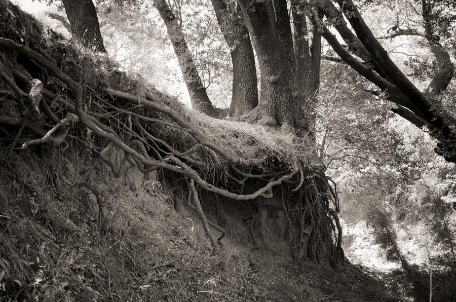 Roots_sm.jpg