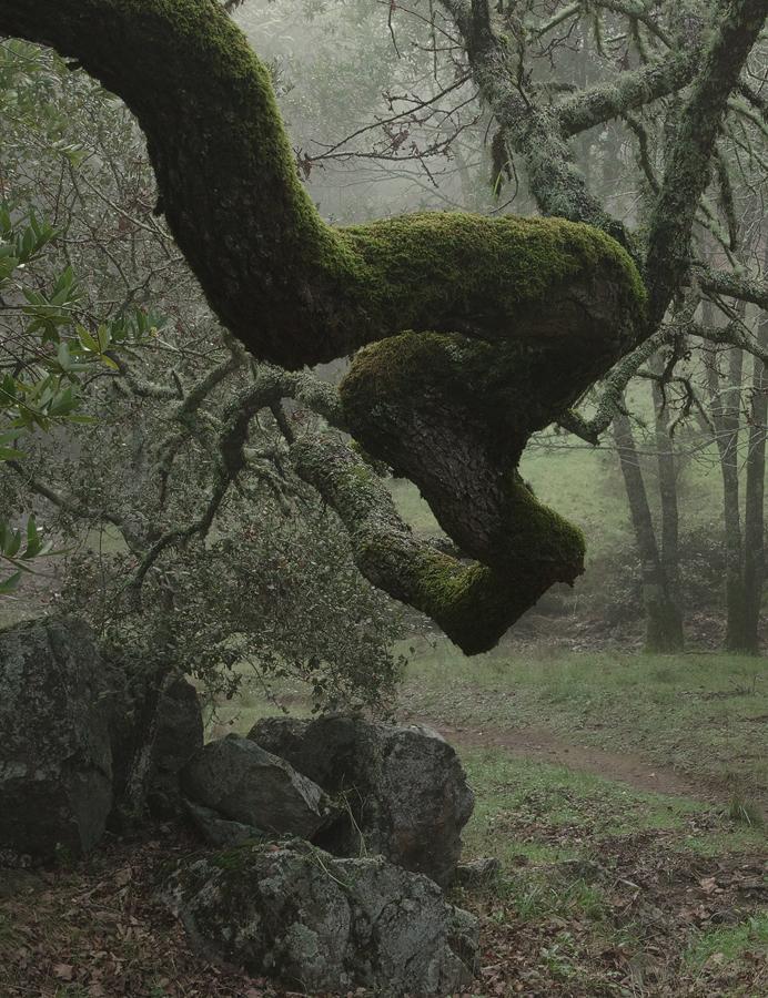 foggy-branch_sm.jpg