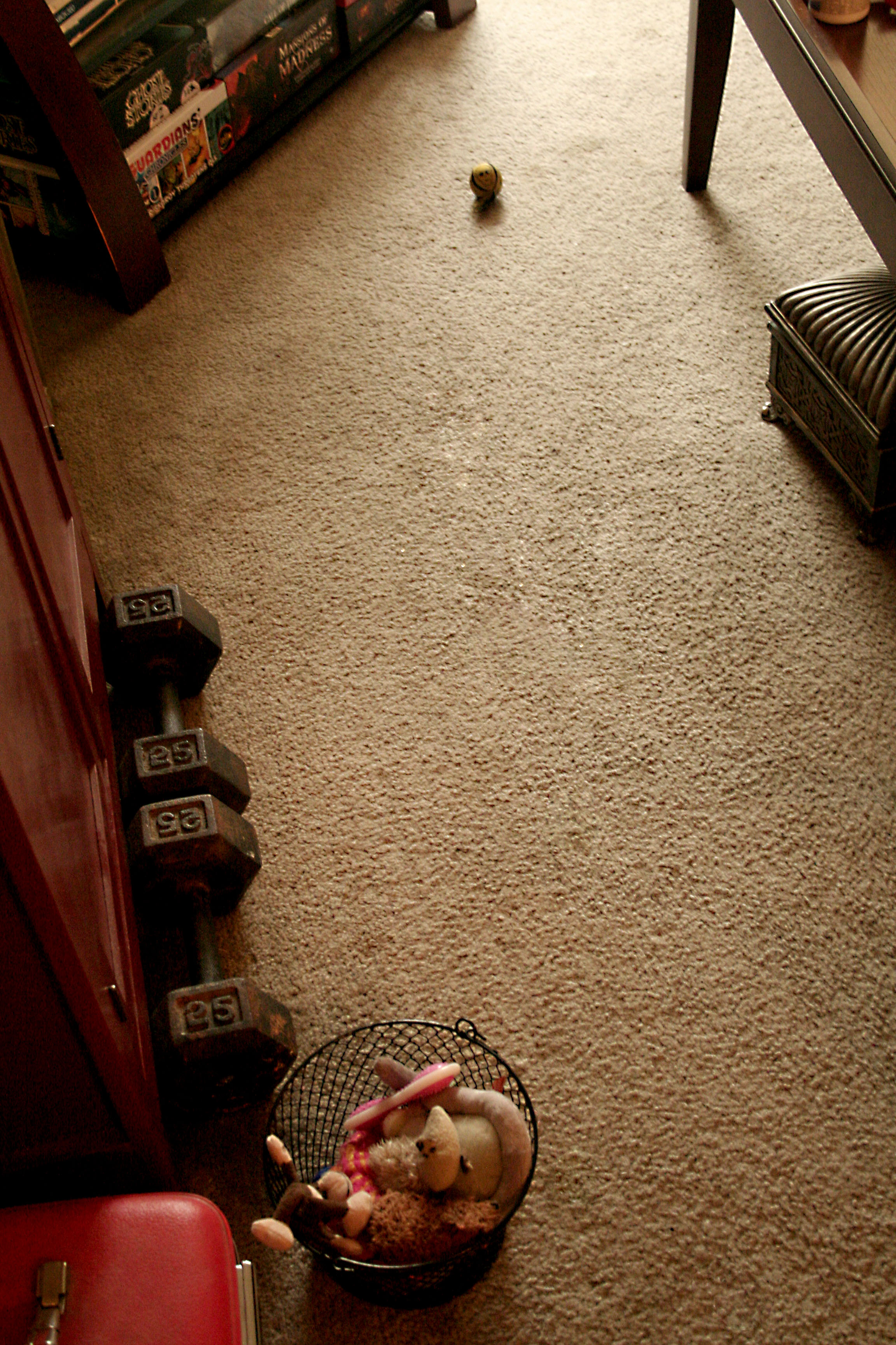 49: i pick up Bigby's toys and he immediately starts pulling them out.