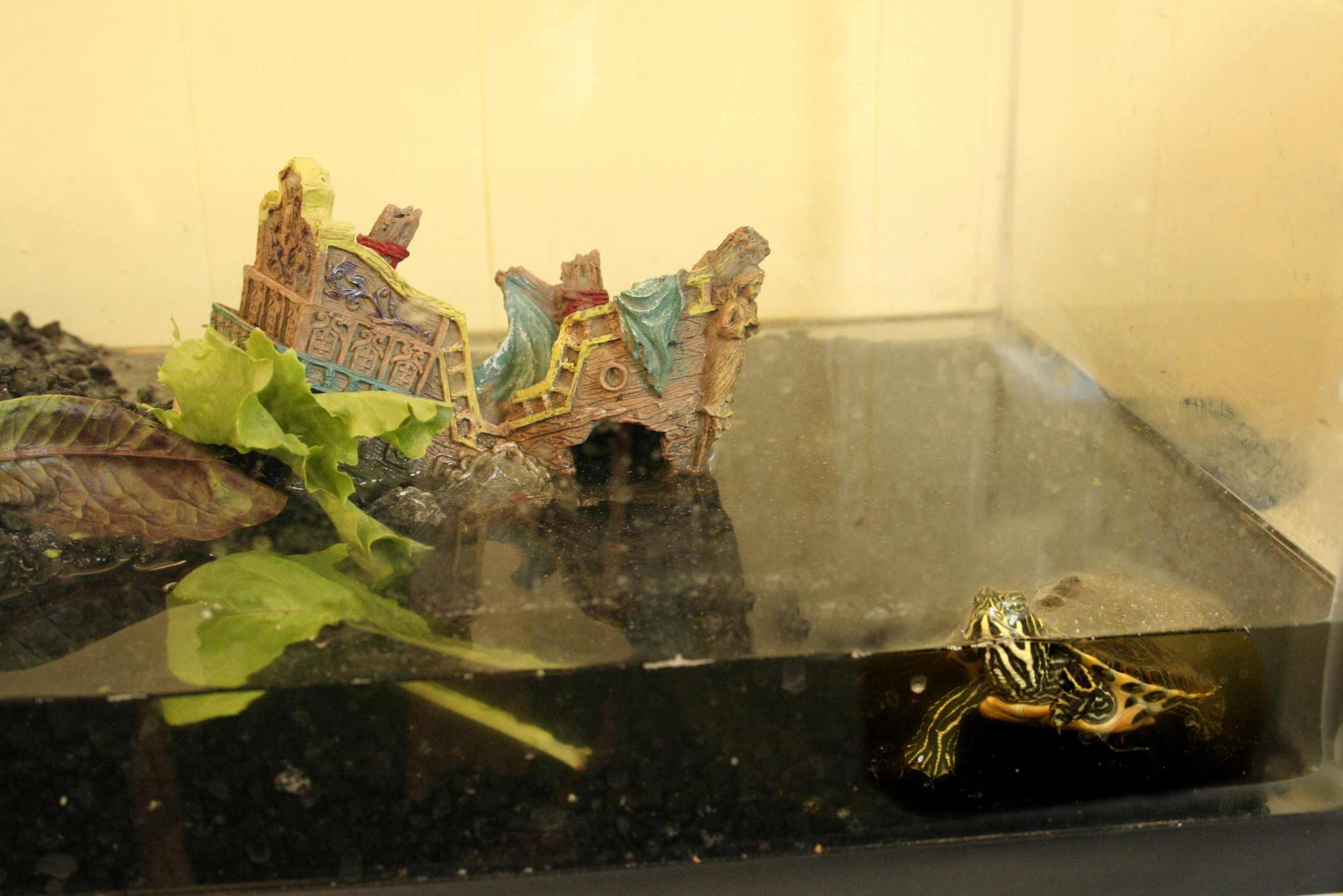 77. i can't tell if paul the turtle likes the place or not.