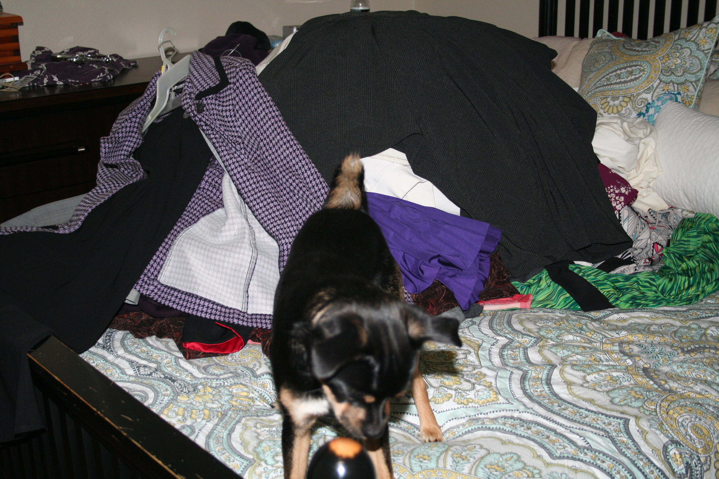 The mountain of clothes, plus Bigby. Gah, I've had that purple suit thing since I was 18. Not anymore!