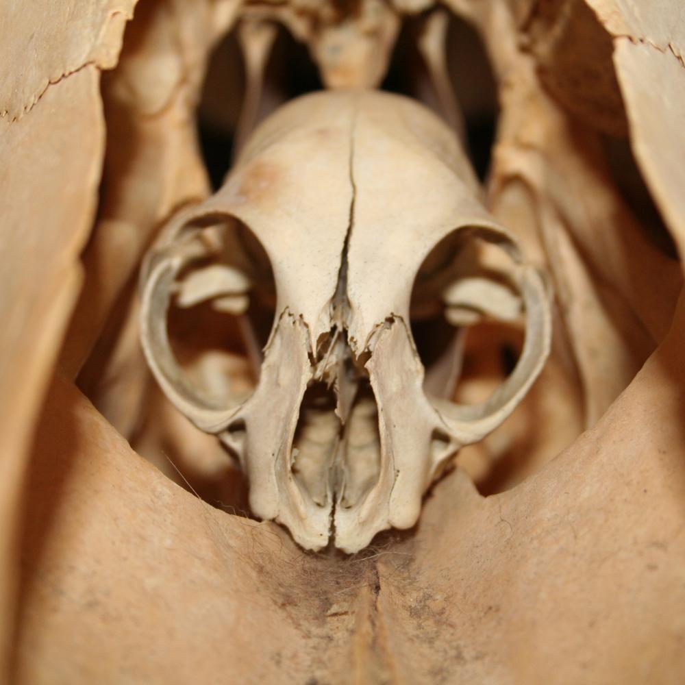 Skull-ception
