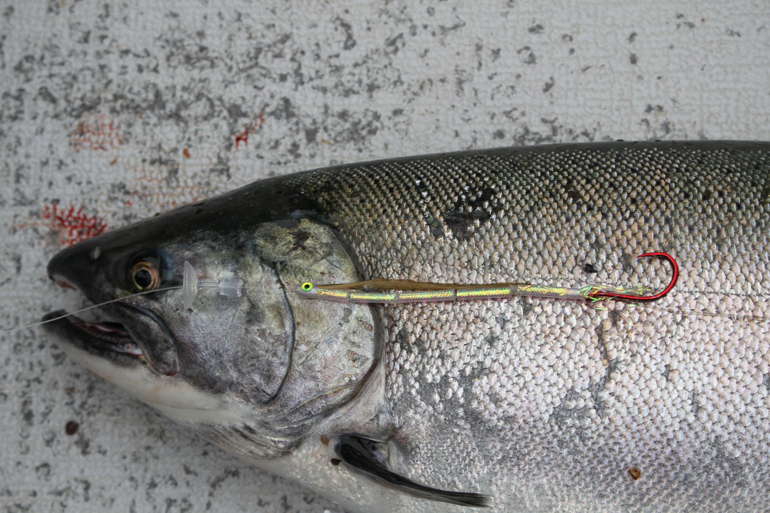 Needle Fish Fly & Coho