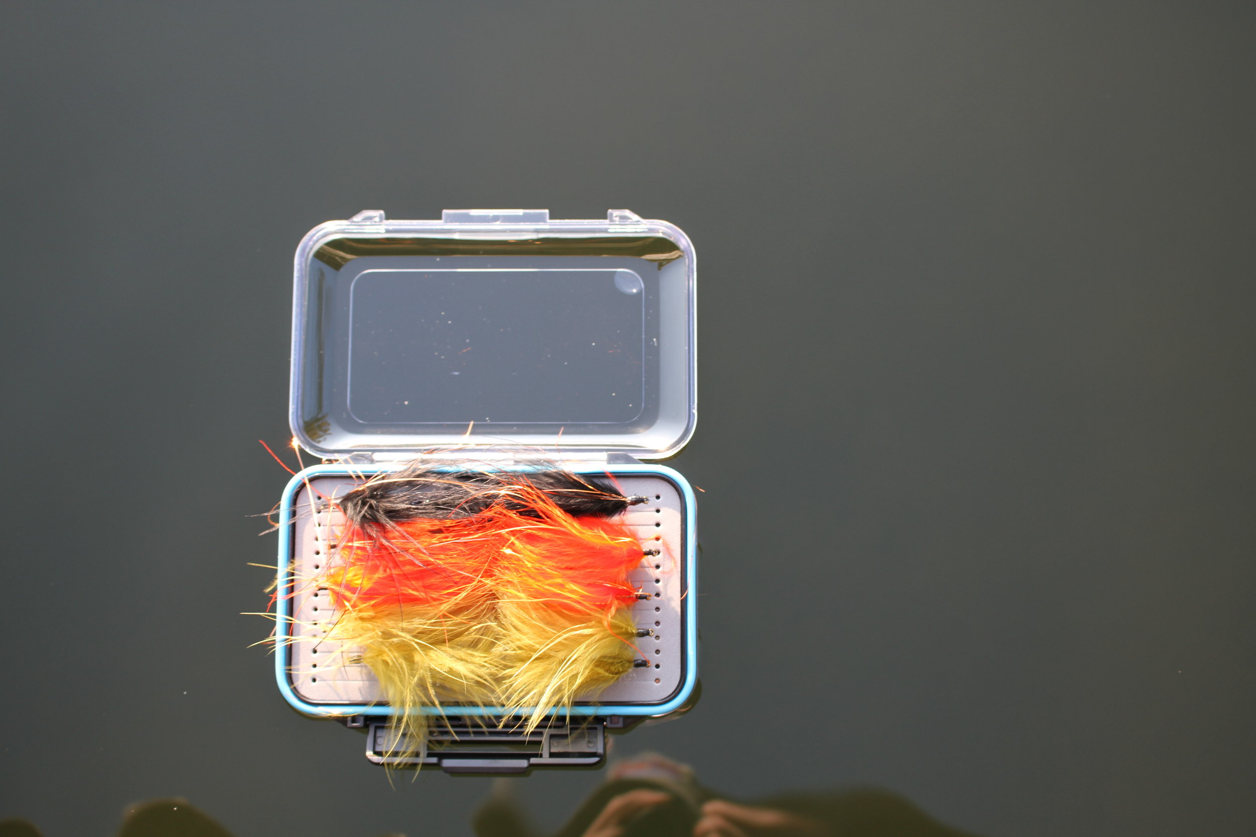 Medium Fly Box Floating with one side open.