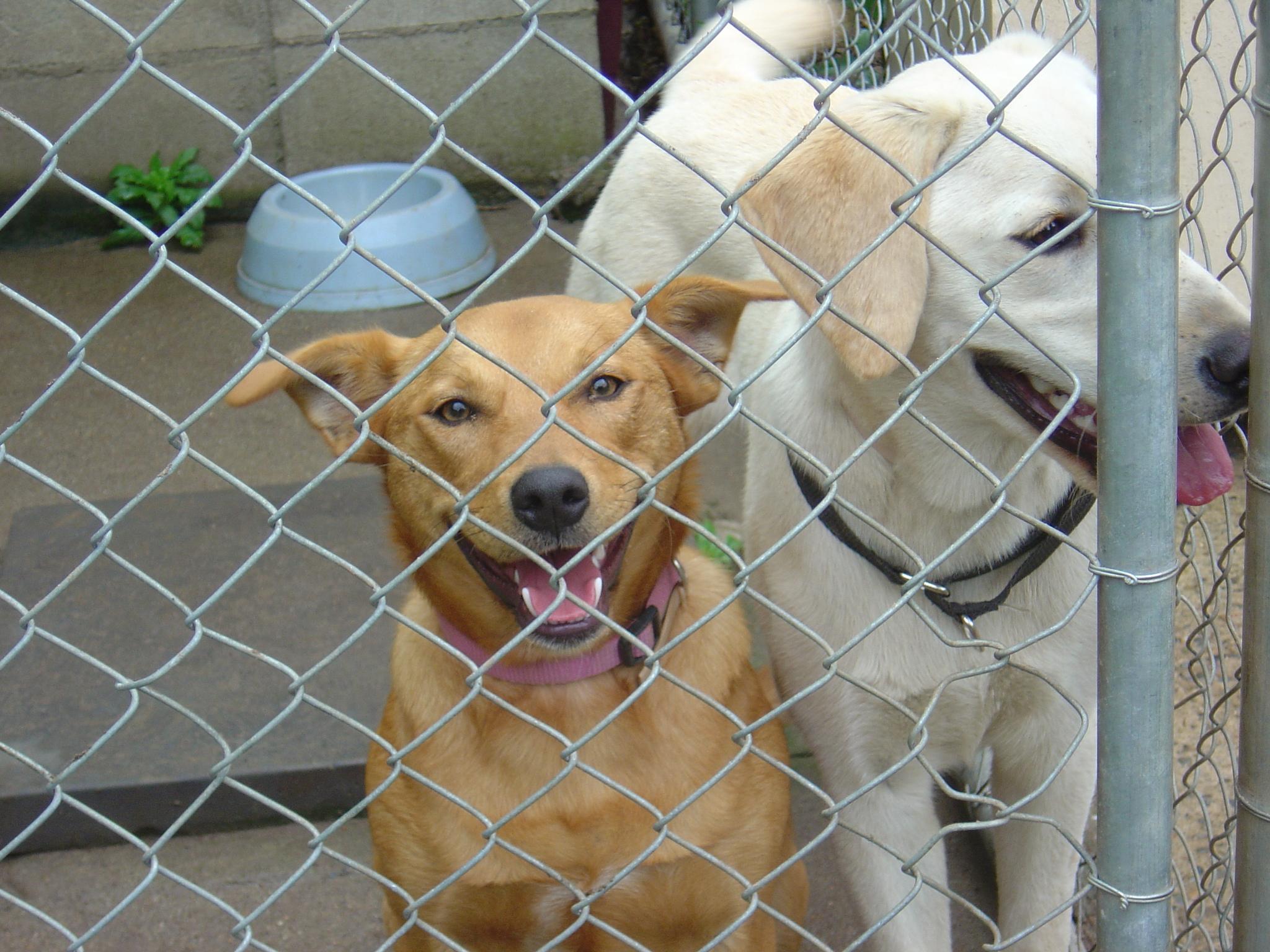 Zoe & Lucky!