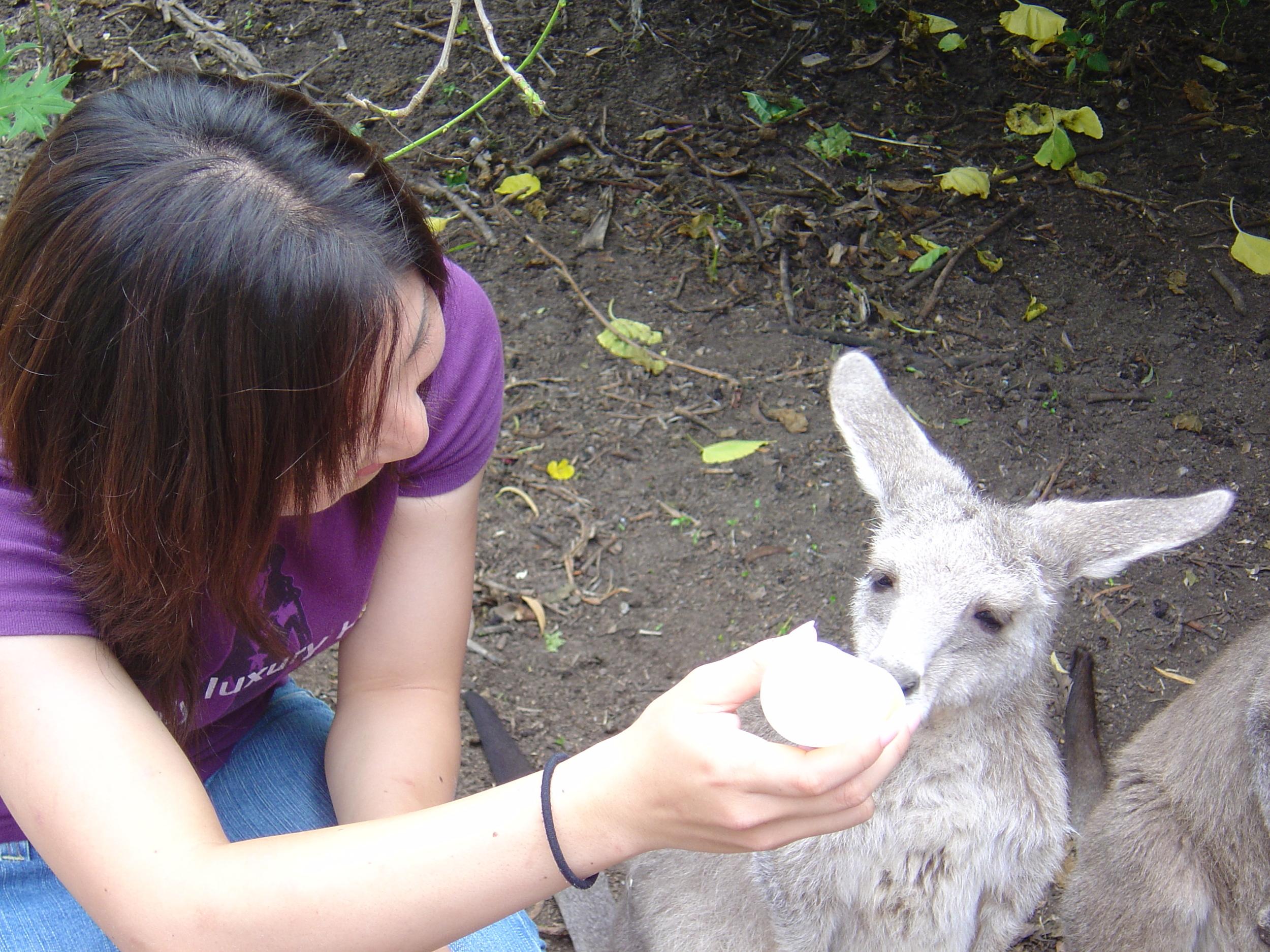 Baby Kangaroo (1).JPG