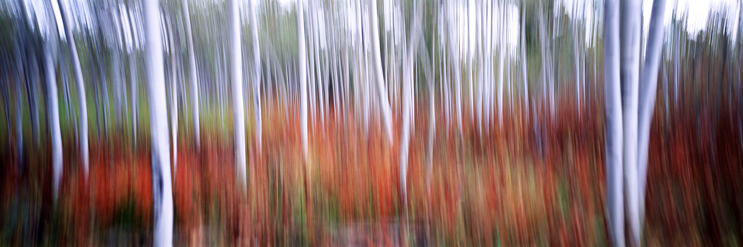 Blurred Aspens, Wyoming 2014