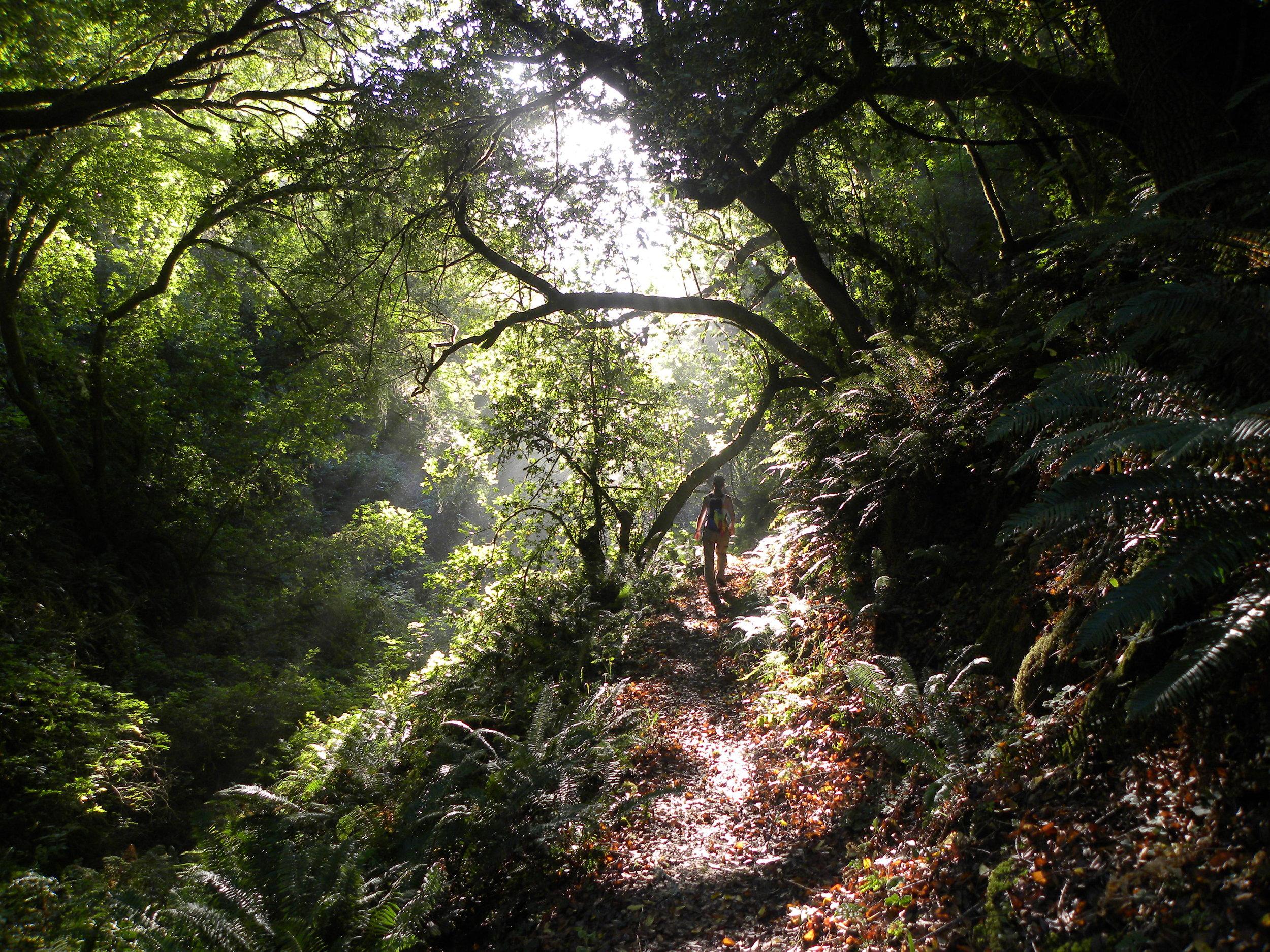 2011 09 29 Lost Coast 089.jpg