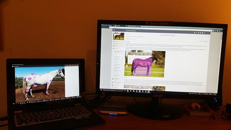 online horse courses