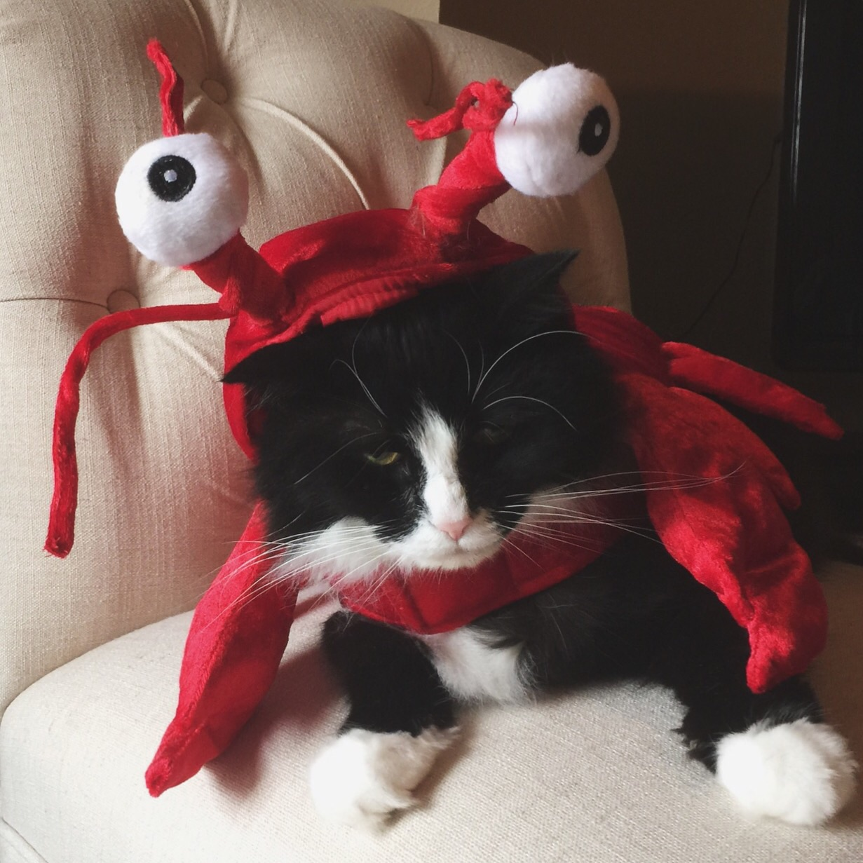 cat's and costumes...not such besties.