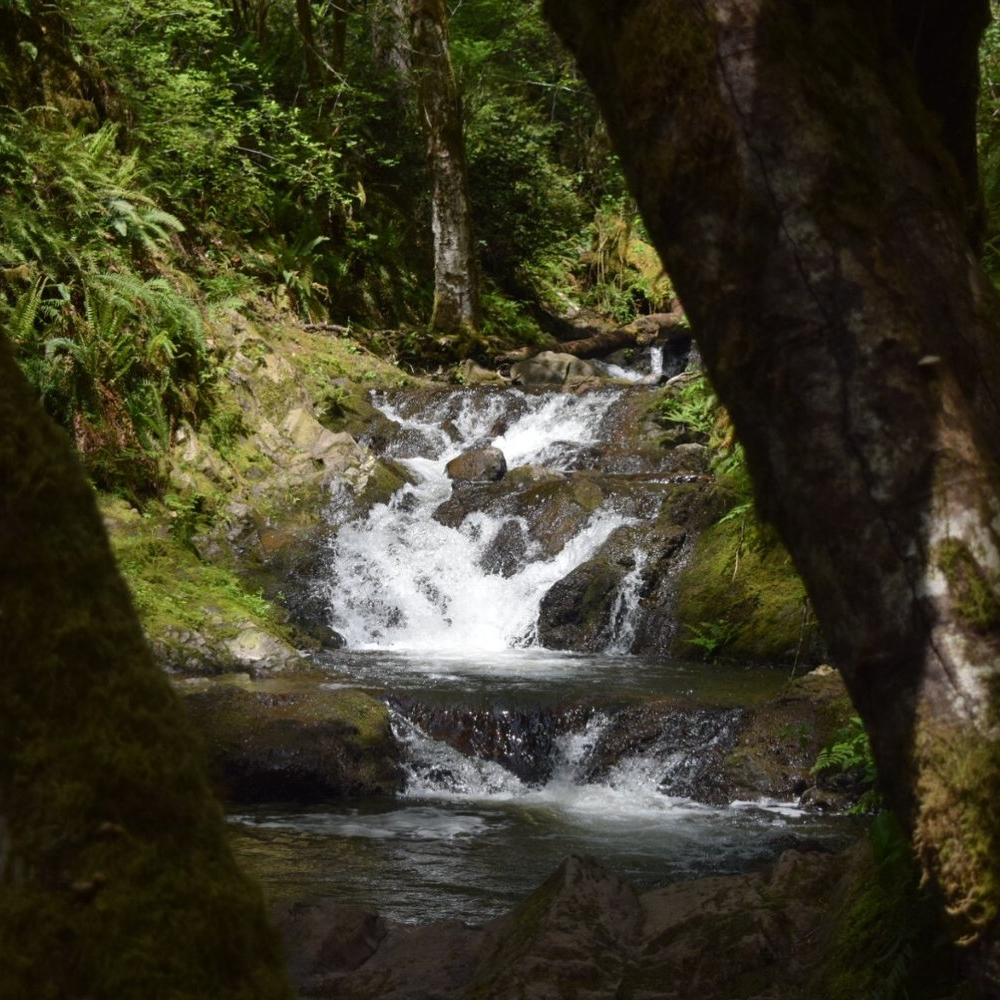 gold creek trail at green mountain -