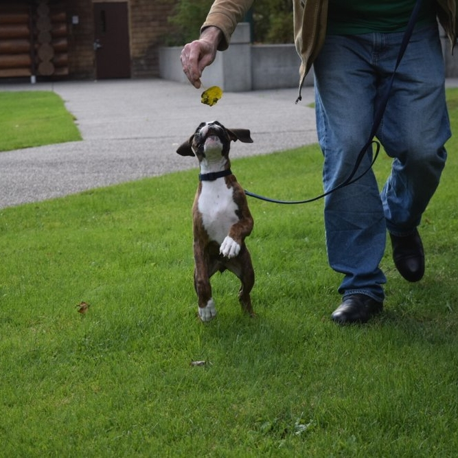 puppa in the park -