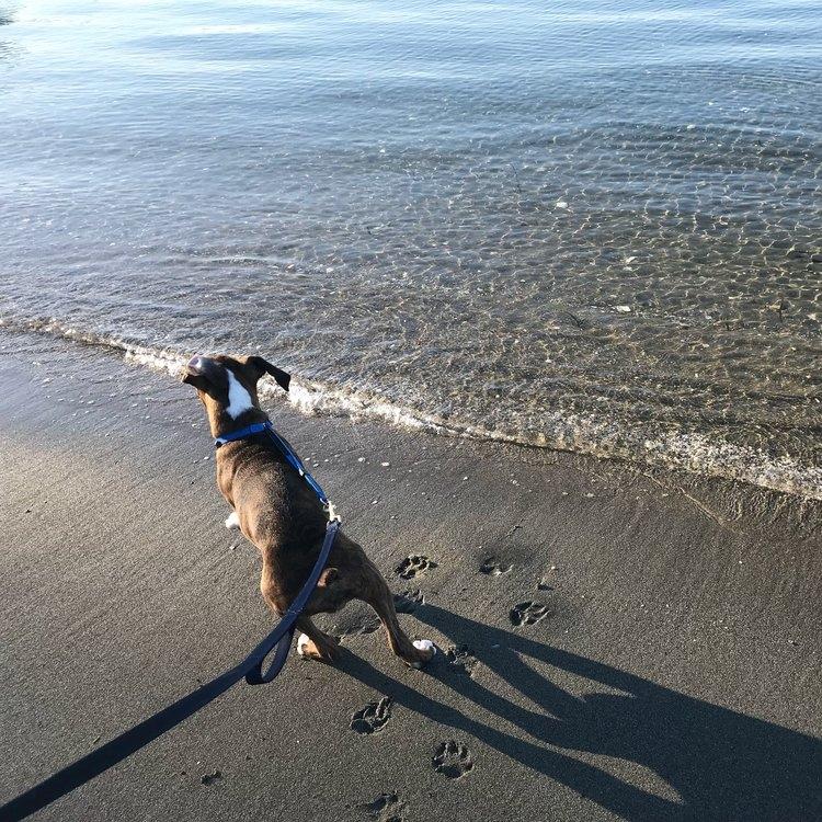tavi's first beach day -