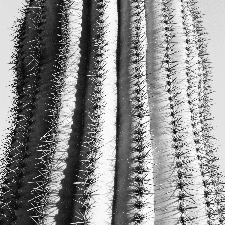 cactus1+1500-039.jpg