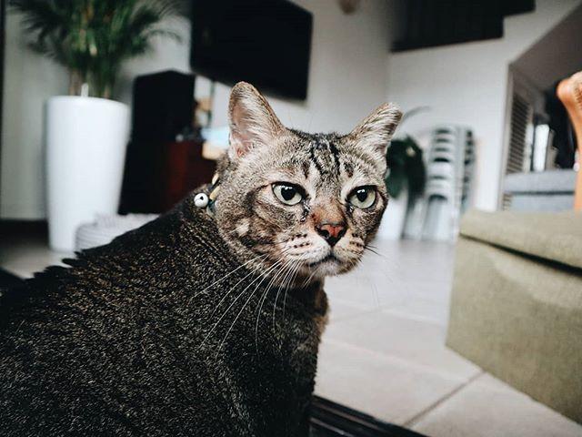 Sometimes Miaowf likes her portrait taken.