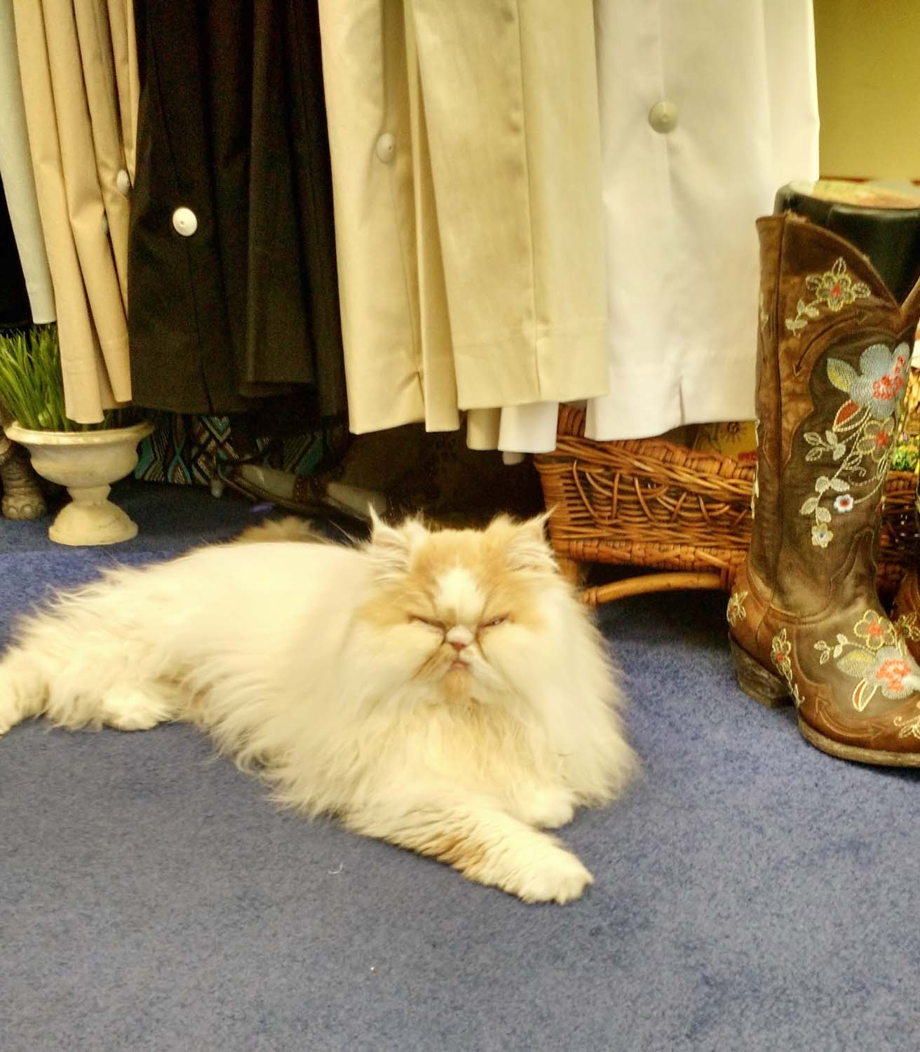 Met this scary beast in a shop and couldn't stop laughing