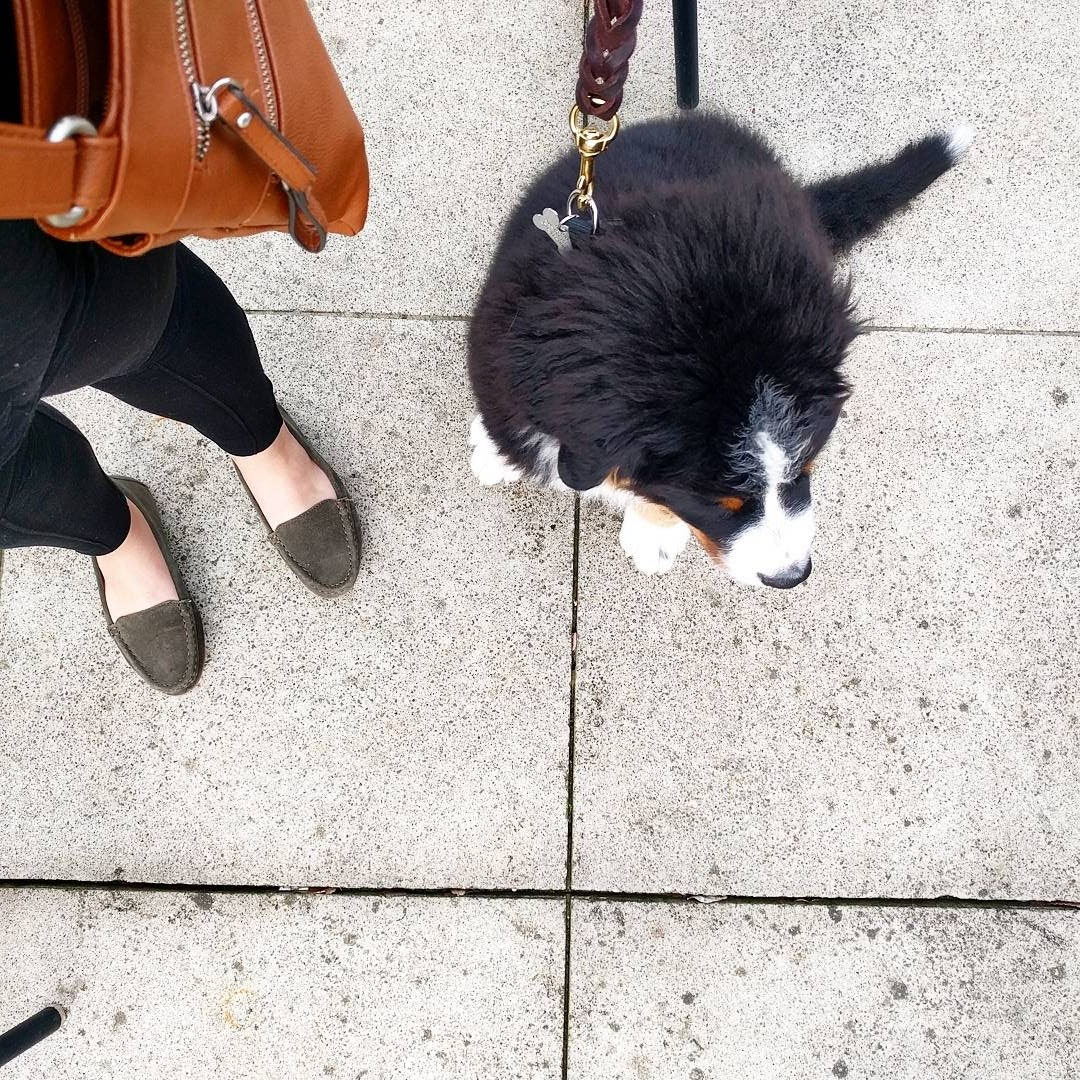 I found some great loafers, and Hondo helped me break them in. He's such a great buddy! -