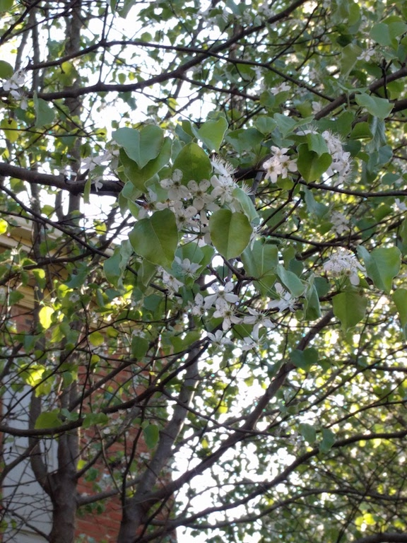 Spring started early in the month and blooms have been sprouting up steadily since.