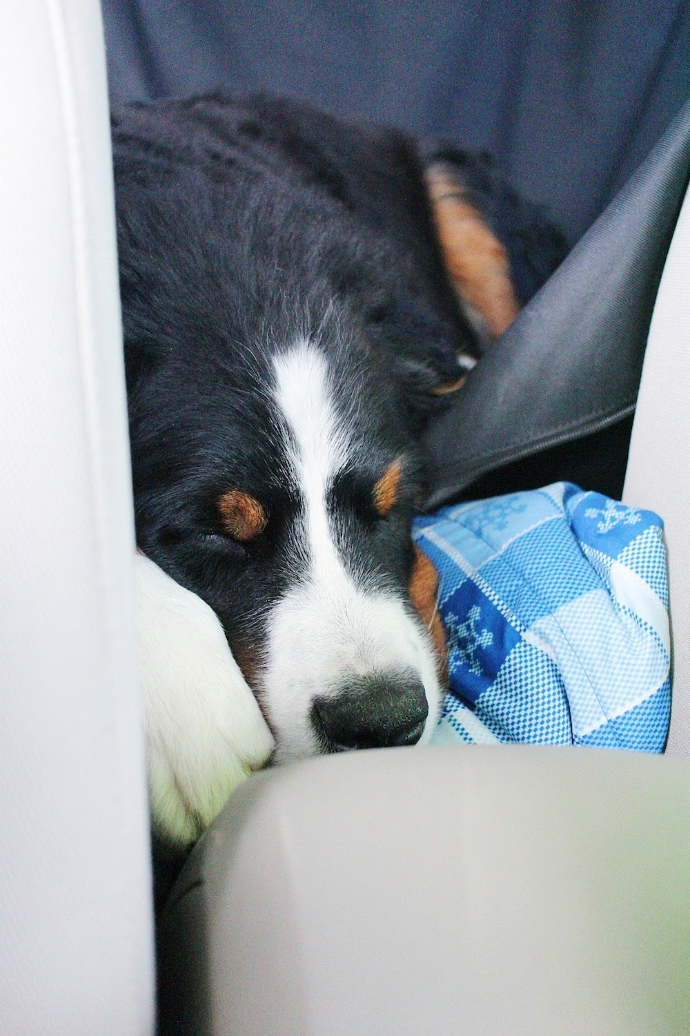 Hondo was a huge champ for our long road trip. Occasionally he'd lay his head on our shoulders for a snuggle, but mostly, he was just fast asleep! We went from Georgia to Illinois to Iowa to Wisconsin to Indiana to Georgia over a week and a half.