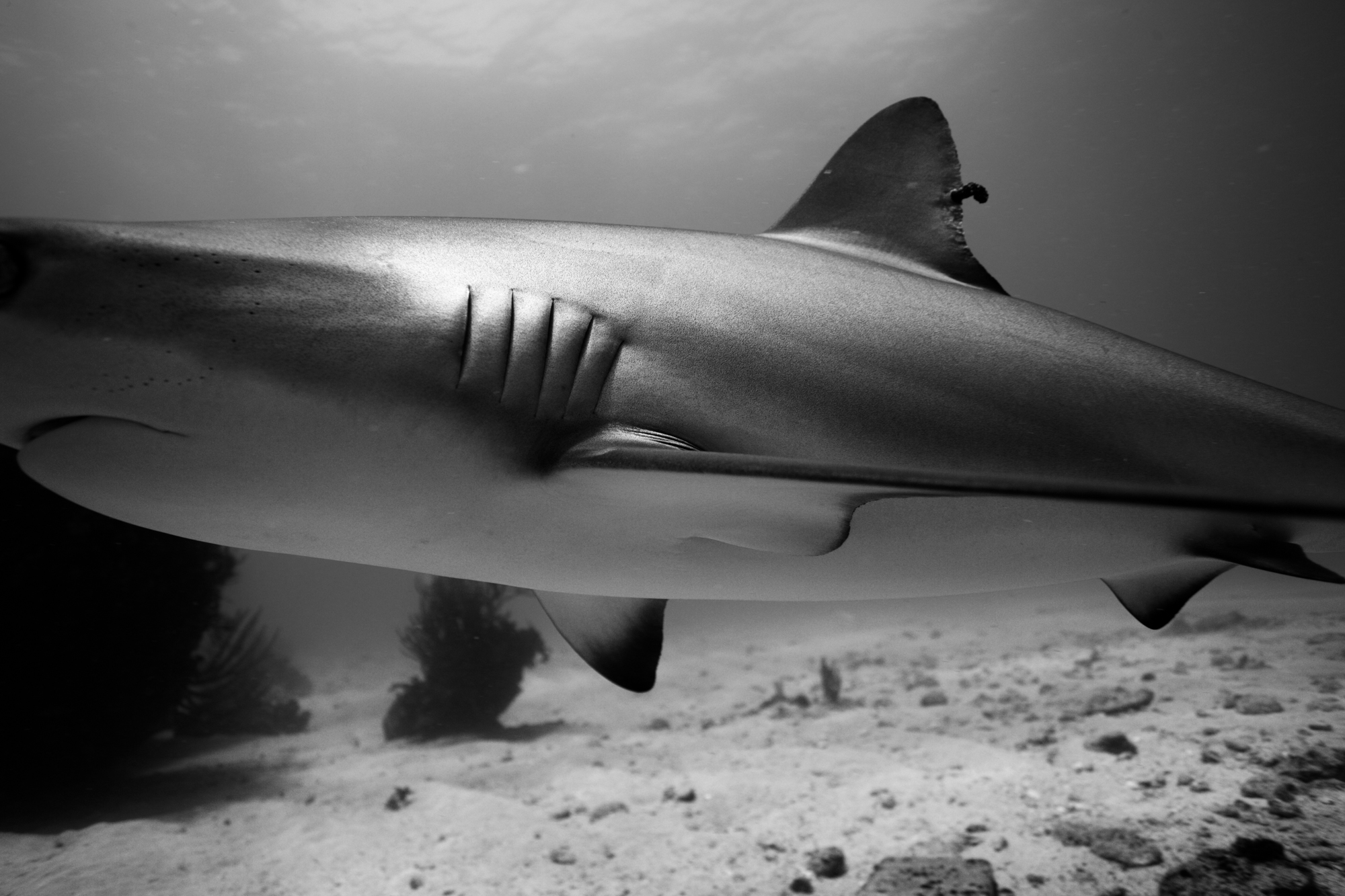 Dive-10.jpg
