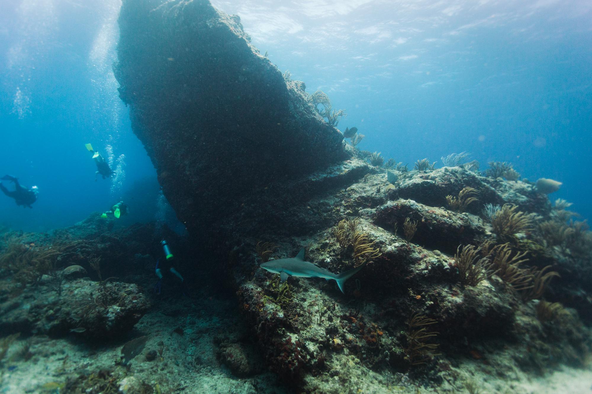 Dive-14.jpg