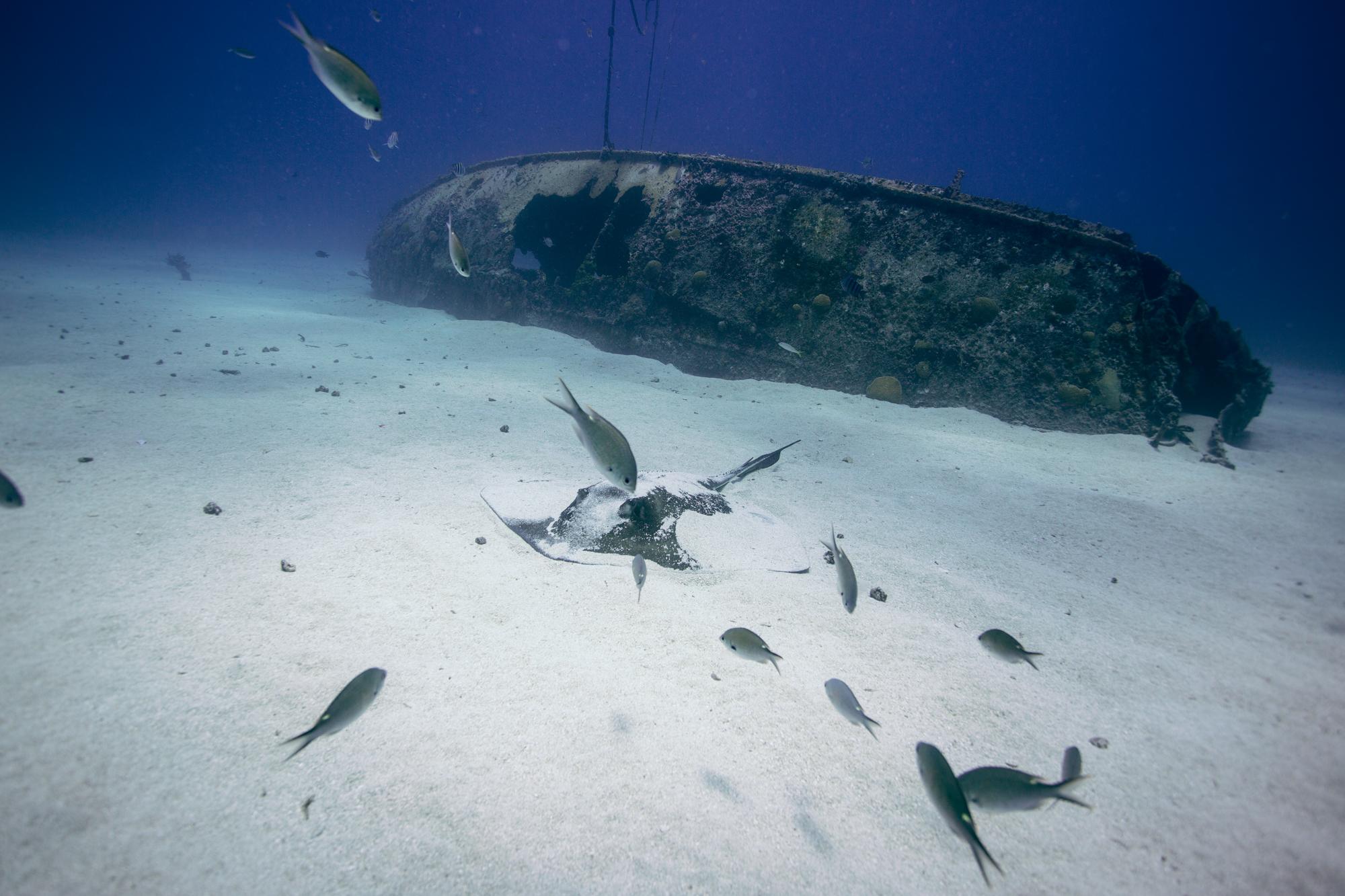 Dive-15.jpg
