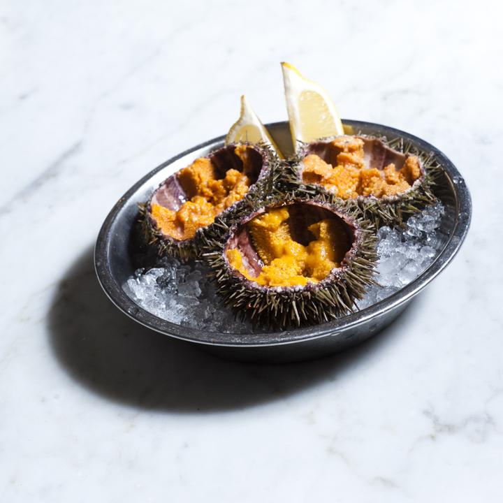 Shellfish - Sea Urchins