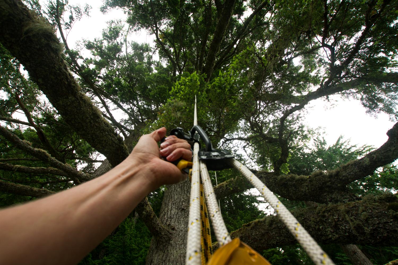 Tree Climbing-13.jpg