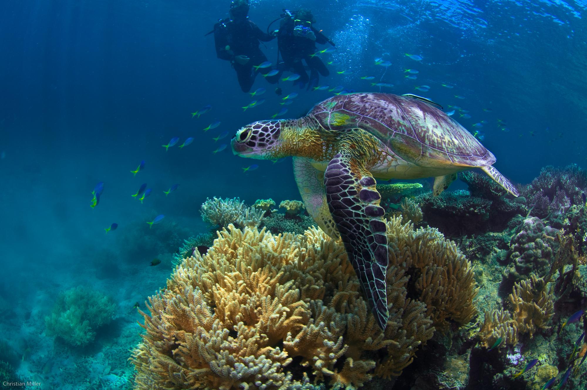 fitzroy-island-resort-great-barrier-reef-australia-hotel-accommodation (8).jpg