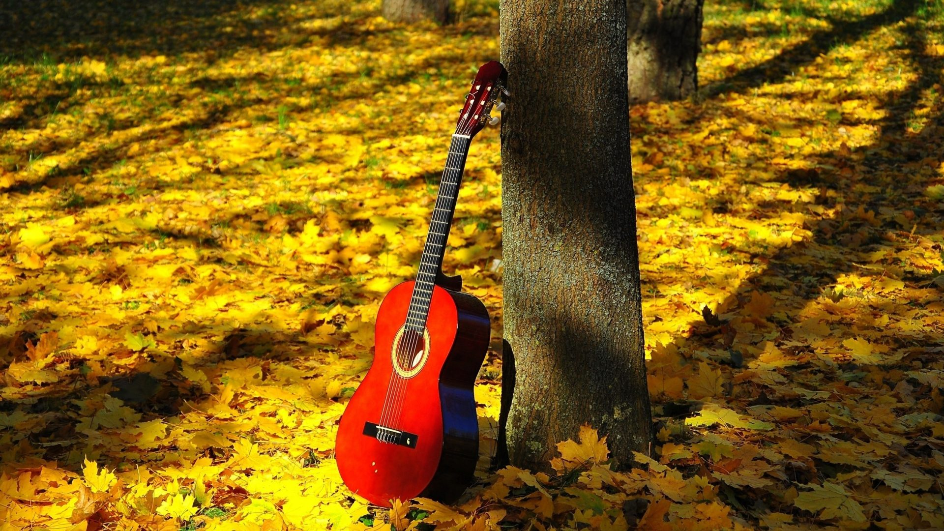 forests-leaves-autumn-music-nature-guitar-forest-wallpaper-hd-free-download-1920x1080.jpg