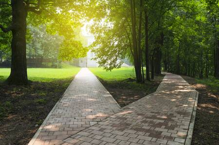 99396805-fork-in-the-road-in-the-empty-park-sunny-summer-morning-.jpg