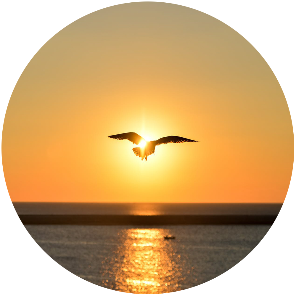 sea-sunset-bird-flying.png