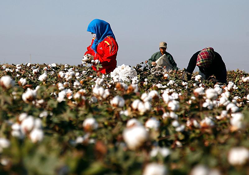 China cotton.jpg