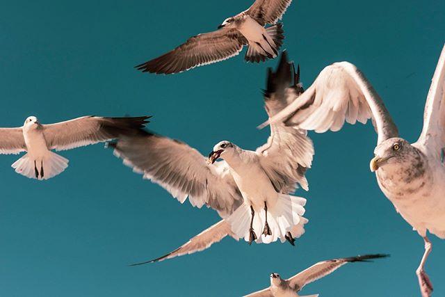 Mal ein paar #Möwen füttern. #mainzamrhein #mainzgefühl . #birdofprey #birdsofprey #raptor #hawk #hawks #falcon #falcons #eagle #eagles #animalsofinstagram #nature #natura #instanature #owl #owls #falconry #hawking #bird #birds #wildlife #animal #animals #wild