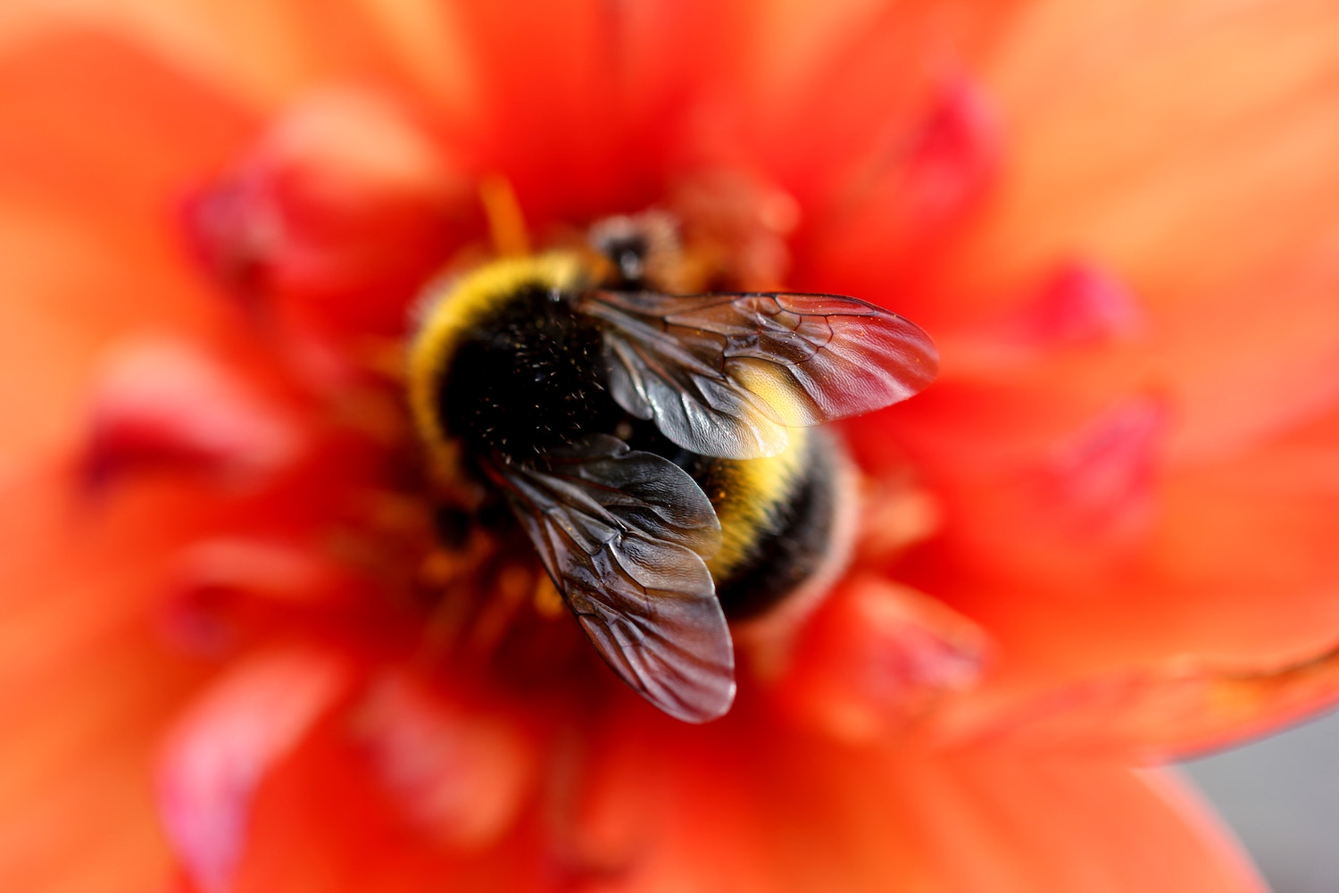 bee and red flower.jpg